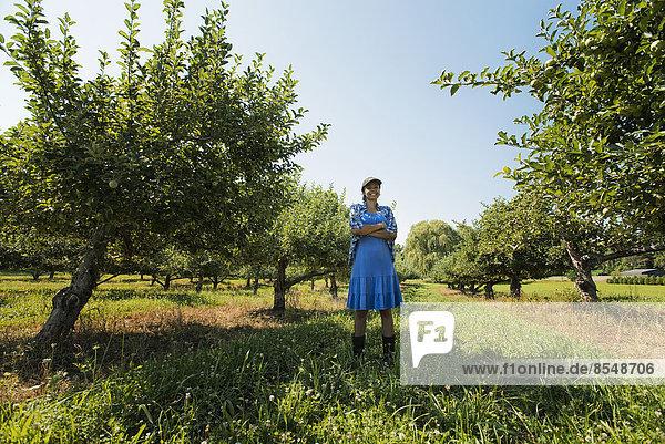 Eine Frau pflückt Äpfel in einem Obstgarten mit Obstbäumen.