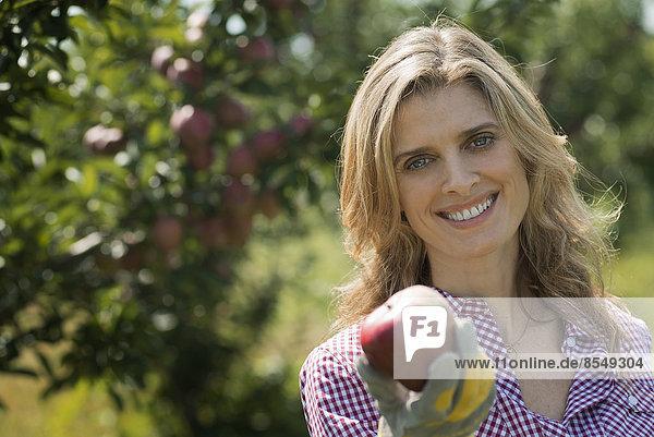 Biobäuerin  eine junge Frau  die einen frisch gepflückten Apfel hält. Obstgarten mit Obstbäumen.