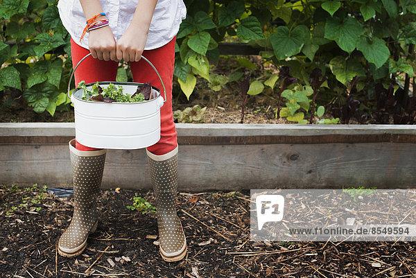 Biologische Landwirtschaft. Ein junges Mädchen trägt einen Eimer mit geernteten Salatblättern.