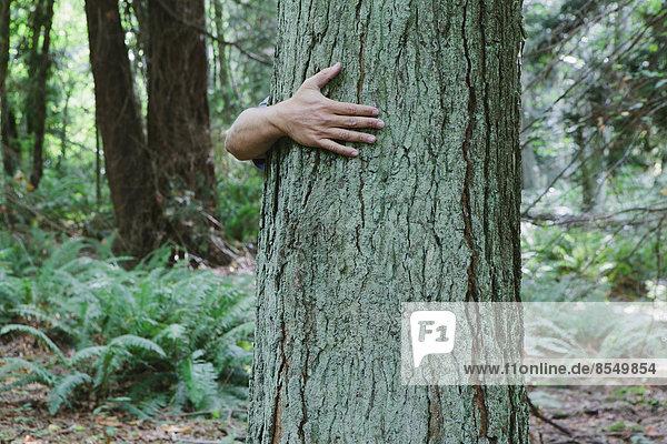Mann umarmt Baum in üppigem  grünem Wald