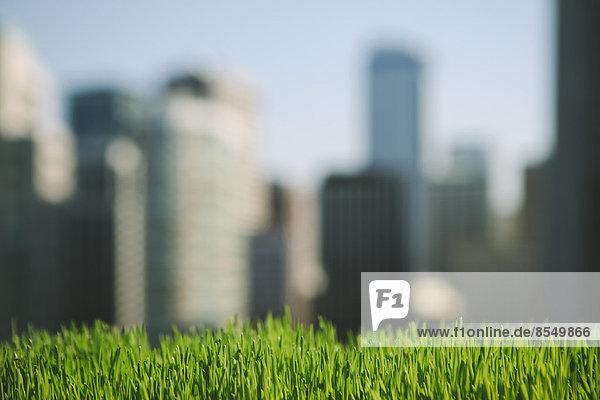 Sattes  grünes Gras im Vordergrund und die Skyline der Stadt Seattle in der Ferne.