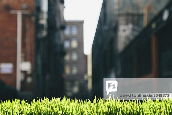 Üppiges  grünes Gras im Vordergrund und die Skyline der Stadt Seattle in der Ferne.