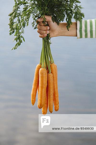 Neunjähriges Mädchen mit Bio-Karotten