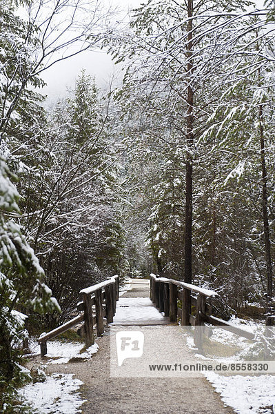 Snow-covered forest  trail with a bridge around Lake Toblach  Lago di Dobbiaco  Toblach  Val Pusteria  Alto Adige  Trentino-Alto Adige  Italy