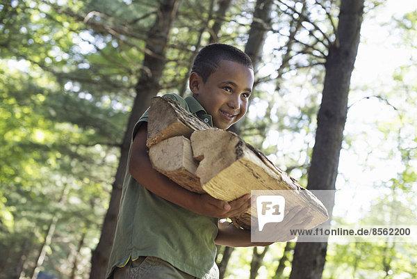Summer. A boy carrying firewood through the woods.