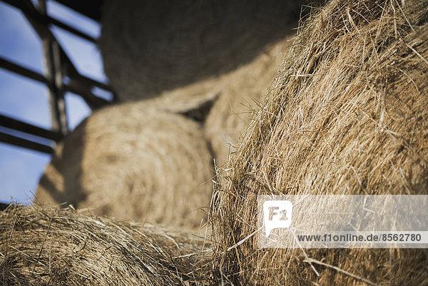 Heu  getrocknetes Gras und Tierfutter  Ballen gestapelt in einer Scheune auf einem Biohof.
