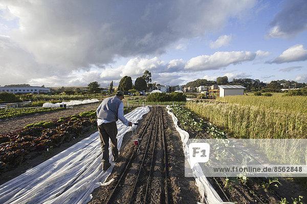Ein Mann  der in den Feldern des Sozialfürsorge- und Arbeitsprojekts  dem Obdachlosen-Gartenprojekt in Santa Cruz  arbeitet. Er säte Saatgut in die gepflügten Furchen.