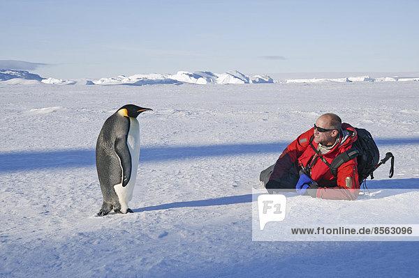 nahe  liegend  liegen  liegt  liegendes  liegender  liegende  daliegen  stehend  Mann  Eis  Stille  Seitenansicht  Pinguin