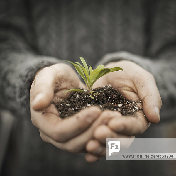 Eine Person in einem kommerziellen Gewächshaus  die einen kleinen Pflanzensetzling in seinen schalenförmigen Händen hält.
