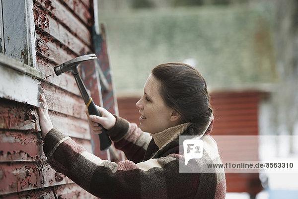 Ein Bio-Bauernhof im Hinterland von New York  im Winter. Eine Frau repariert mit einem Hammer die Schindeln an einer Scheune.