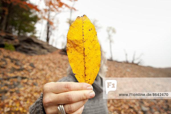 Eine Frau hält ein Herbstblatt heraus  das ihr Gesicht verdeckt.