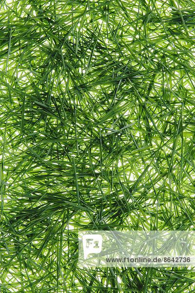 Ein Haufen Bio-Weizengras auf weißem Hintergrund