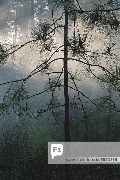 Ein kontrollierter Waldbrand  ein absichtlich gelegtes Feuer  um ein gesünderes und nachhaltigeres Waldökosystem zu schaffen. Der vorgeschriebene Waldbrand schafft die richtige Voraussetzung für das Nachwachsen des Waldes.