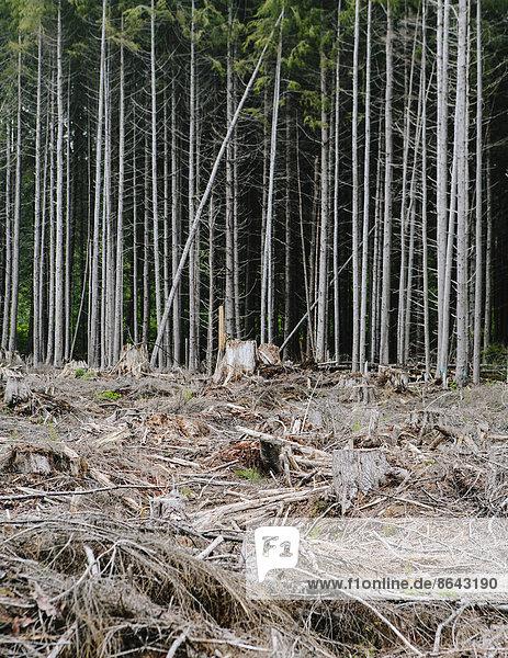 Kürzlich abgeholzter Regenwald  Hoher Regenwald  Olympic NF