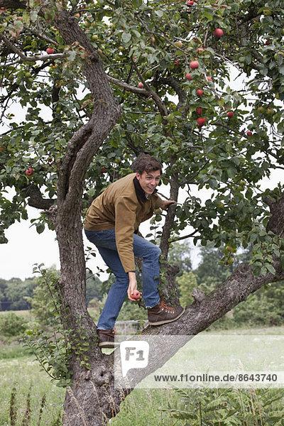 Mann klettert auf Apfelbaum