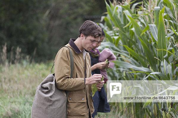 Junges Paar im Maisfeld stehend