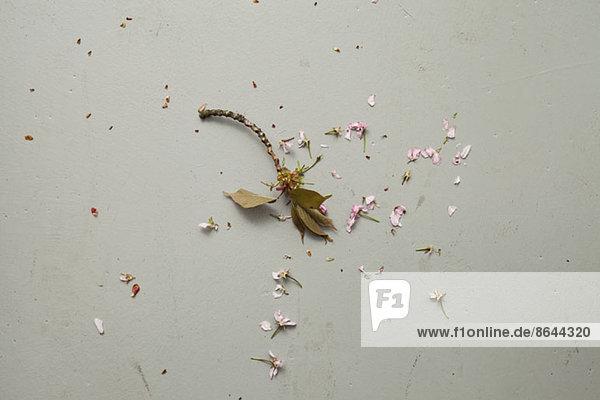 Eine zerstörte Blume  Nahaufnahme