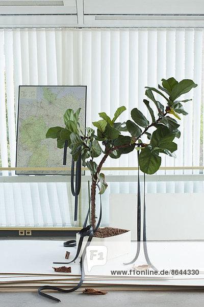 Topfpflanze mit daran hängenden Gummibändern  Karte im Hintergrund