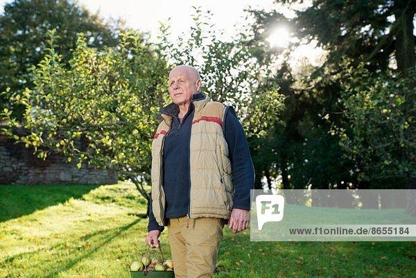 Ein älterer Mann trägt einen Eimer Äpfel.