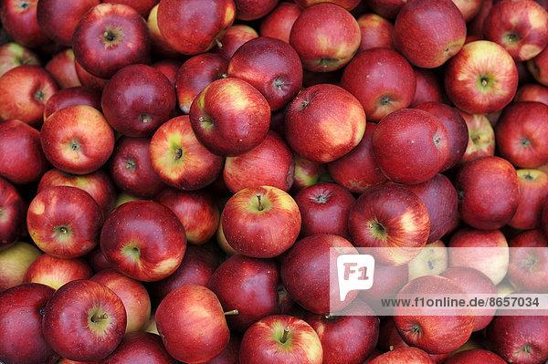 Frische rote Äpfel  Baden-Württemberg  Deutschland