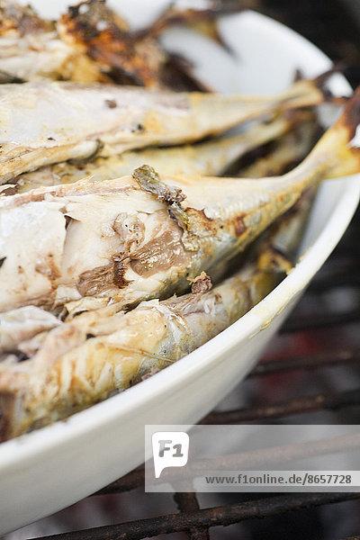 Fisch  Pisces  Soße  gegrillt  Senf