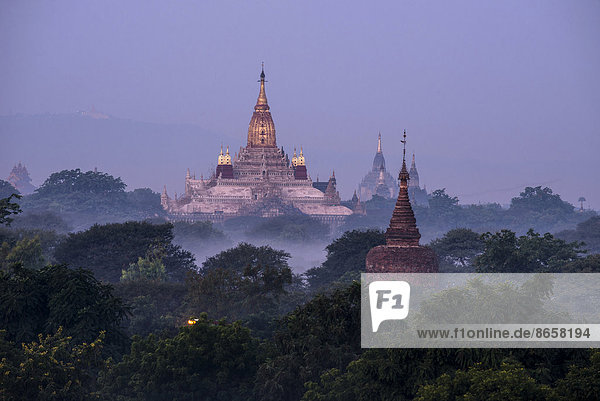 Ananda Temple in the morning fog  blue hour  gilded tower structure or Shikhara  stupas  pagodas  temple complex  Plateau of Bagan  Mandalay Division  Burma or Myanmar