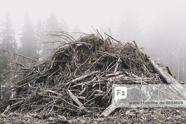 Haufen von Holzabfällen aus Kahlschlag. Nebel im Wald.