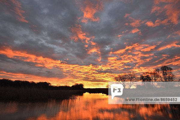 Sonnenaufgang über dem Leiner See im Biosphärenreservat Mittelelbe  Dessau  Sachsen-Anhalt  Deutschland