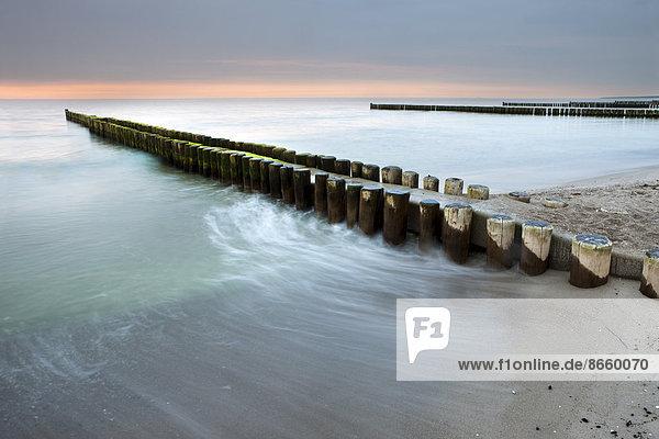 Groynes on the Baltic coast  sunset  Mecklenburg-Western Pomerania  Zingst  Fischland-Darß-Zingst  Germany