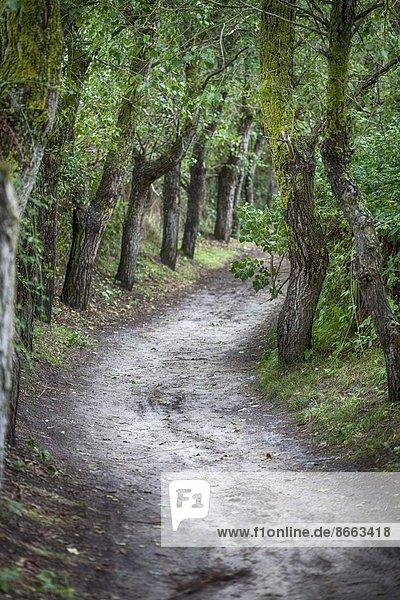 Waldweg in der Noramdie  Frankreich