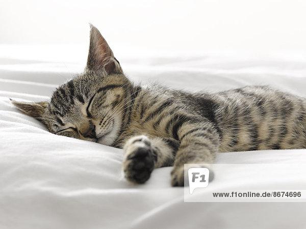 Kätzchen schlafend auf Decken Kätzchen schlafend auf Decken