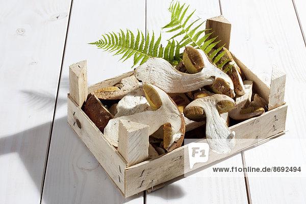 Steinpilze (Boletus edulis) und Farnblätter in einer Holzkiste auf Holztisch