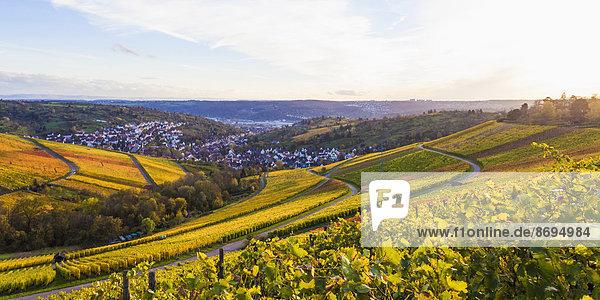 Deutschland  Baden-Württemberg  Stuttgart  Blick über die Reben nach Uhlbach