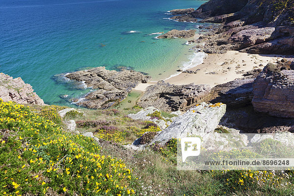 Steilküste am Cap Frehel  Bretagne  Frankreich