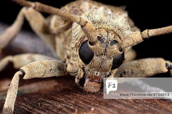 Fotografie  nehmen  Malaysia  Sarawak  Wildtier