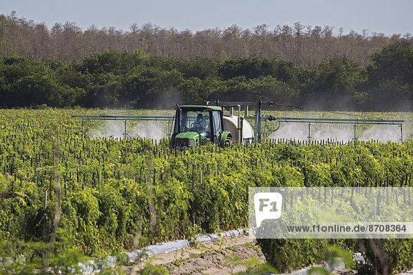 Tractor sprays pesticides on tomato plants  Immokalee  Florida  United States
