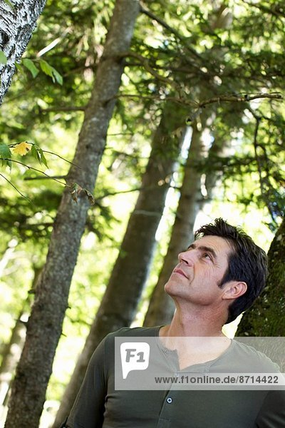 Mature man looking up at trees in forest