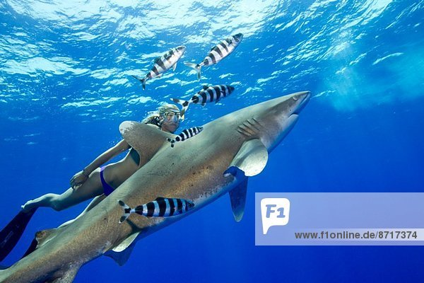 Snorkeler and Oceanic whitetip.