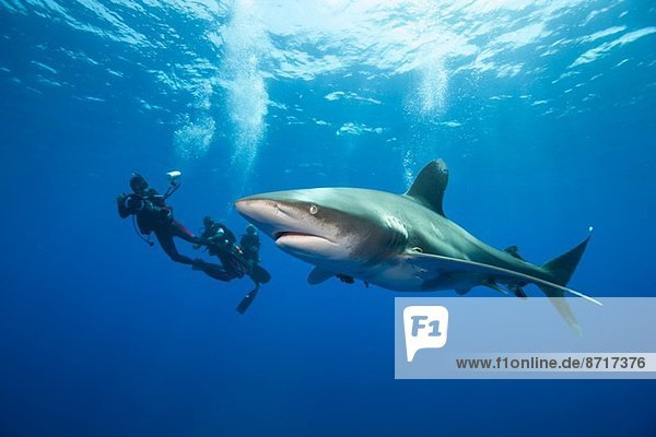 Di…ers and Oceanic whitetip.