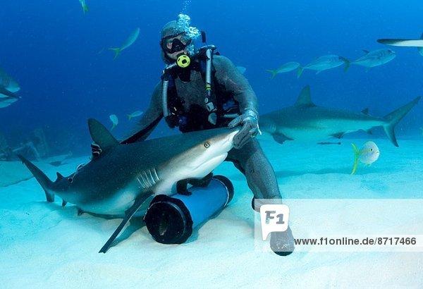 Haifutterautomat mit Hai.
