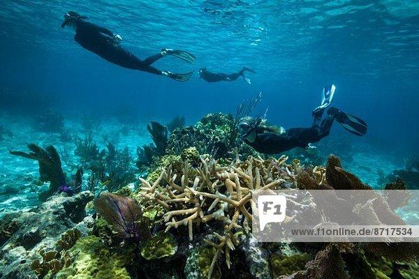 Schnorchler auf einem Korallenriff.