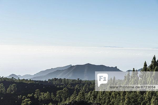 Lavafeld mit Kanarischen Kiefern (Pinus canariensis)  Teide-Nationalpark  UNESCO-Weltnaturerbe  Teneriffa  Kanarische Inseln  Spanien Lavafeld mit Kanarischen Kiefern (Pinus canariensis), Teide-Nationalpark, UNESCO-Weltnaturerbe, Teneriffa, Kanarische Inseln, Spanien