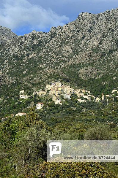 Frankreich Berg Tal Dorf Lama Lama buanicoe glama Korsika