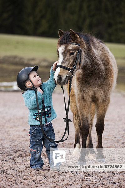 Young child wearing a riding helmet stroking a pony  dun  with a bridle  Tyrol  Austria