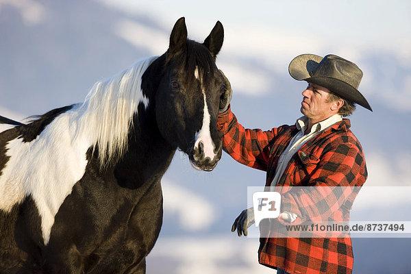 Cowboy mit Paint Horse Hengst  black tobiano  Nordtirol  Österreich