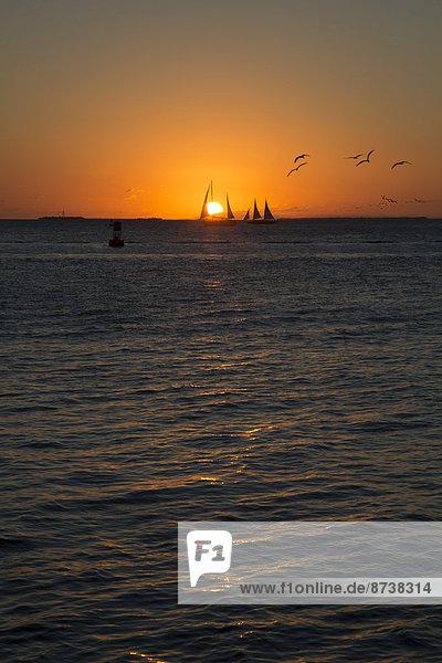 Sailboats at sunset  Key West  Florida  United States