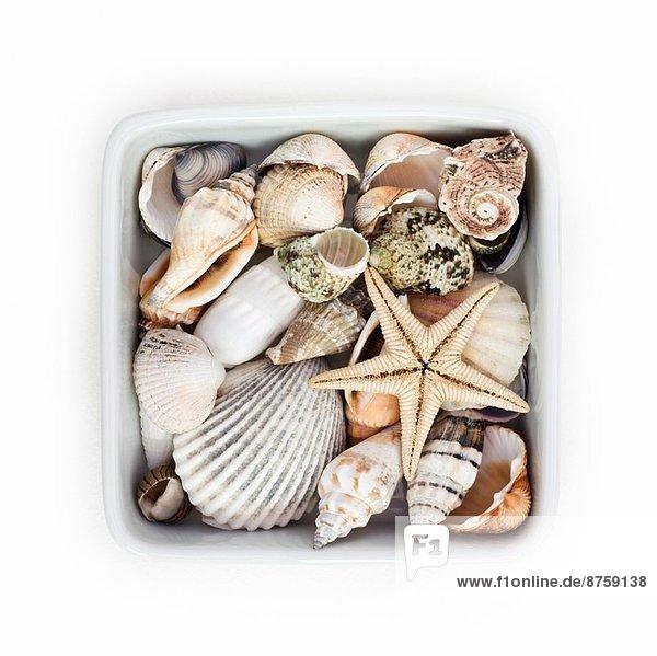 Muschel weiß Keramik Container Seestern