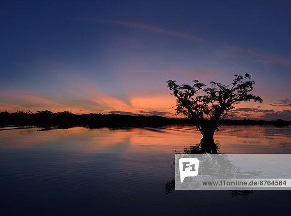 Bäume  Sonnenuntergang  Río Cuyabeno  Fluss Cuyabeno  Ecuador