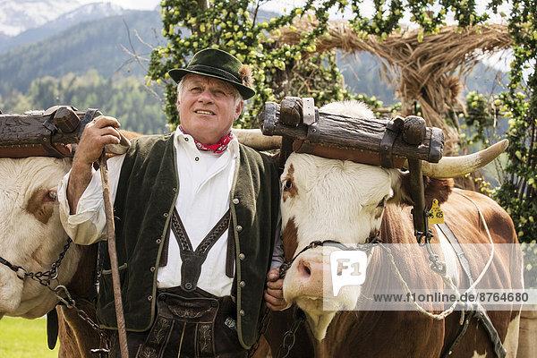 Mann in Tracht mit zwei Ochsen im Gespann  Gauderfest  Zell am Ziller  Zillertal  Nordtirol  Österreich Mann in Tracht mit zwei Ochsen im Gespann, Gauderfest, Zell am Ziller, Zillertal, Nordtirol, Österreich