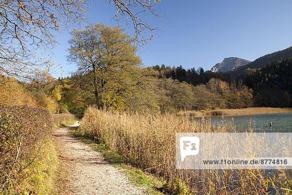 Deutschland  Bayern  Oberbayern  Bad Reichenhall  Blick auf Trail und Thumsee im Herbst